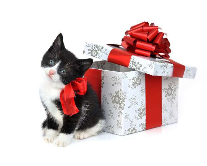 Cute Kitten Present Christmas Wallpaper